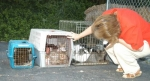 Denise McNally, president of the Helping Paws board of directors, checks out the 17 cats abandoned in the parking lot of the Helping Paws adoption center on Bus.-24.