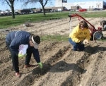 Huntington County Master Gardener Marlene Schleiffer, of Huntington (left), and 4-H Educator Julia Miller plant onion sets in the Helping Hands Community Garden Wednesday, April 23.