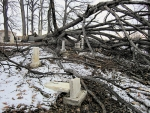 An 85-foot tree lays in the old Roanoke Cemetery after it collapsed on March 14. Strong winds forced the tree to the ground, and it damaged several tombstones as it fell. Restoration will take place after weather conditions become more favorable.