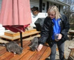 Joan Gardave sets out treats for two of the colony of cats she keeps watch over at her home in Huntington. Gardave, who heads up Jamie's Legacy, seeks to trap, neuter or spay then release feral cats to control the population of the felines throughout the city.