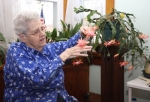 Christmas cactus hobbyist Alice Stickler points out the different parts of her peach-colored Christmas cactus in her home on Friday, Dec. 5. Christmas cactuses are made up of green segments attached to each other in long strands. Once or twice a year, the ends of these strands bloom in a variety of different colors.