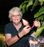 Sharon Laupp, of rural Andrews, shows one of the flower buds of her night-blooming cereus plant, just hours before it opened for one night only on Wednesday, Aug. 30. The plant blooms only once per year, after nightfall, and closes with the first rays of the morning sun.