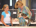 """Judge Kathy Reehling (right) inspects """"Bandit"""" while Rachel Landers looks on during the Huntington County 4-H Cat Show on Tuesday, July 16, at Hier's Park."""
