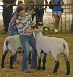 Mickensey Parker maneuvers her sheep into place during the 2015 4-H Sheep Show. She competed in the Class 1 Commercial Ewe Lambs (109-125 pounds) and again in the Class 21 Champion and Reserve Natural Color Market Lamb (117-142 pounds) Saturday, July 25.