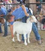 Aaron Amick sets his goat up for judging during the 4-H Supreme Showmanship Contest held Wednesday, July 25, in the Parkview Huntington Hospital Show Arena on the Huntington County Fairgrounds. Contestants were judged on how well they handled a horse, beef steer, dairy cow, goat, sheep and hog, as well as completed answers on a written test. Amick came out on top, winning the contest.