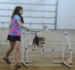 Elise Neher's dog, Brandy, literally clears the last hurdle in obstacle course competition at the Huntington County 4-H Dog Show on Saturday, July 6, at the First Federal Savings Bank Community Building.