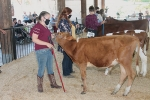 Abagayle Wright holds her dairy calf steady as she keeps an eye on the judge in the 4-H Starter Calf Show, Tuesday, July 28, at the Parkview Huntington Hospital Show Arena.