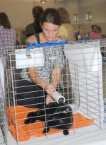 """Mindi Hoffman brushes over """"Dilley"""" in preparation for the 2010 Huntington County 4-H Cat Show on Tuesday, July 20, in Heritage Hall at Hier's Park."""