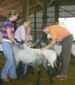 Abby Blocker (left) and Ashley Ambriole (center) watch as Judge Jason Shuck takes a look at their sheep during the Huntington County 4-H Sheep Show on Wednesday, July 28.