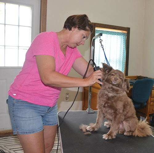 "Stacey Lewis gives a haircut to a dog named ""James Brown"" at her new business, Happy Dog Grooming and Positive Training."