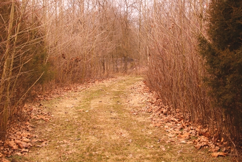 The Andrews Utility Department has built trails on a wooded piece of land owned by the town. The department has put the trails in over the course of several years and continues to add new ones. Open to the public, the trails are located beyond the end of Terrell Street in Andrews.