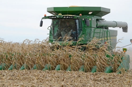 Huntington County farmer Tim Burnau combines his corn crop Friday, Nov. 17, along CR900N. Burnau plans to have the remainder of his crop harvested in time for Thanksgiving dinner today, weather permitting.