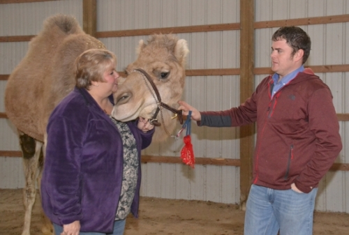 Lori VanOver (left) nuzzles Cash the camel as Evan Wall holds the animal's harness. A pie-in-the-sky conversation between VanOver and Wall quickly became reality, and the two now share ownership of five camels and seven ponies.