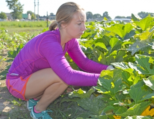 Emma Helmich, one of the many volunteers at the Helping Hands Community Garden, harvests summer squash on Wednesday, Aug. 3, as the garden nears the end of its summer harvest. Fall planting is scheduled to begin this week.