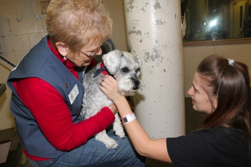 Huntington County Jail inmate Mary Whited (right) pets Bailey, a schnauzer owned by Donna Norwood (left), during a pet therapy visit to the jail Thursday, Nov. 17. Four dogs and their owners, members of the Three Rivers Visiting Dogs Huntington Team, visited each cell block at the jail, letting their canines interact with the inmates.
