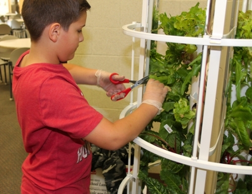 Fifth-grader Trever Walker harvests lettuce from the plant tower located in the cafeteria of Flint Springs Elementary School on Wednesday, Nov. 2. Trever is a member of the school's Garden and Nature Club, which has worked on the project since September.