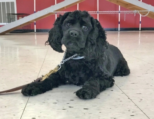 Lilly Anne, a rescued Cocker spaniel, will have a party on Saturday, Aug. 24, at the Huntington County Humane Shelter from noon to 2 p.m. to celebrate not only her first birthday, but also her recovery from having a serious illness that required thousands of dollars in treatment.