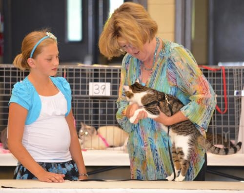 "Judge Kathy Reehling (right) inspects ""Bandit"" while Rachel Landers looks on during the Huntington County 4-H Cat Show on Tuesday, July 16, at Hier's Park."
