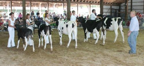 Judge James Eash (right) looks over a line of Grade Holsteins during the Huntington County 4-H Dairy Show on Saturday, July 21, at Hier's Park.