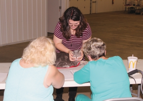 """Bethany Marcum (middle) shows off her cat, """"Snuggles,"""" to judges Lori Kline (left) and Karen Farber at last year's Huntington County 4-H Fair Cat Show in the First Federal Savings Bank Community Building. This year's cat show is set for Monday, July 15."""